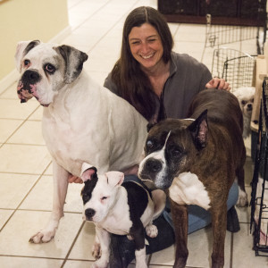 Carol with Judy Sircher's lap dogs: Rookie, Atticus and a foster pup named Bart.