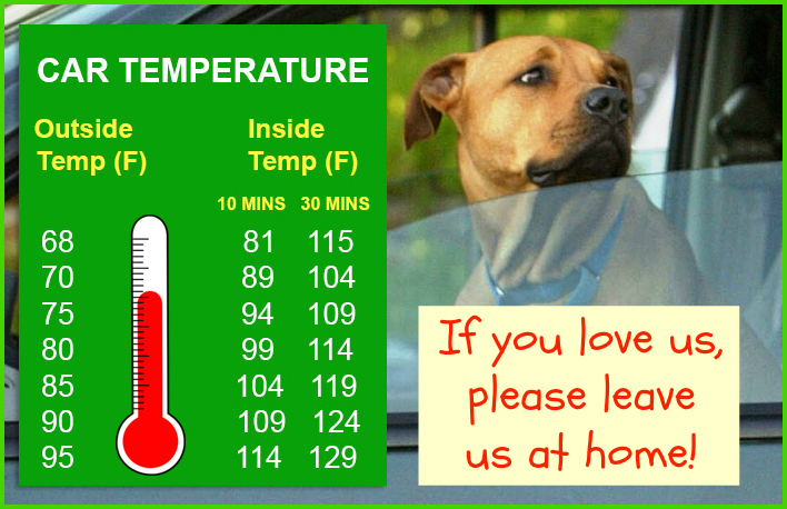 Do not leave dogs in hot cars
