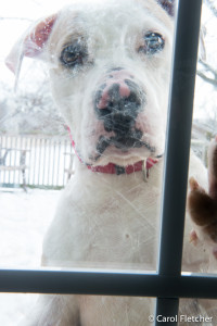 """Chico outside door looking in """"There's a new blog?"""""""