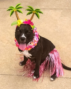 dog in grass skirt costume