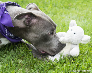 Gus dogs are deserving rescue toy dog
