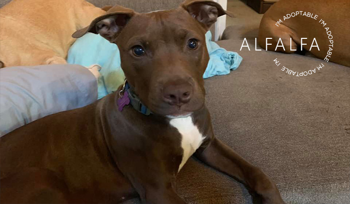 Dogs are Deserving Rescue – All breed and Pit Bull Dog Rescue